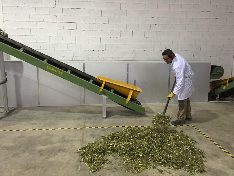 tratamiento biomasa